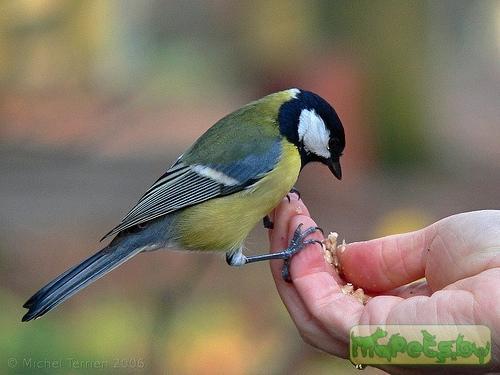 птица зеленого цвета фото