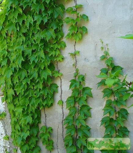 Комнатные растения названия и фото цветов уход и