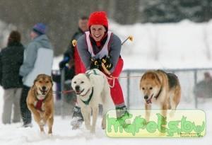 Подготовка собаки к каникроссу
