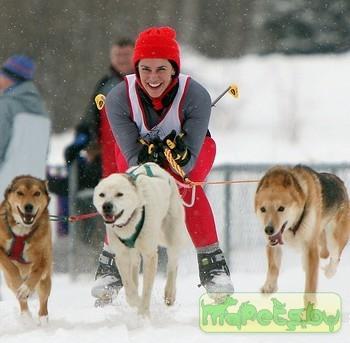 Собаки в ездовых видах спорта