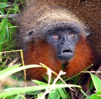В лесах Амазонии за 3 года открыто множество новых видов