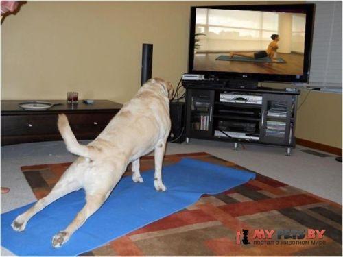 Животные и йога
