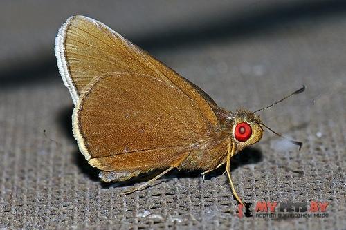 Matapa aria