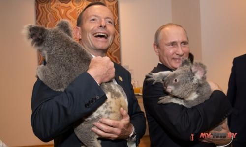 Путин, коала