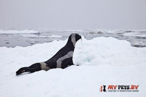 Ribbon seal