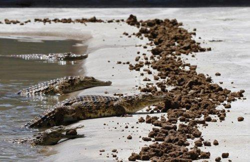 На крокодиловой ферме. Фото из архива, Reuters