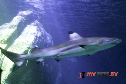 Рифовая акула Фото: Michaela Rehle, Reuters