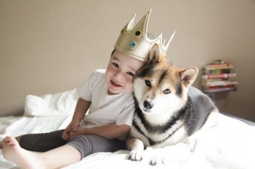 Dog-hou-4