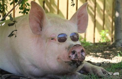 Esther-pig-17