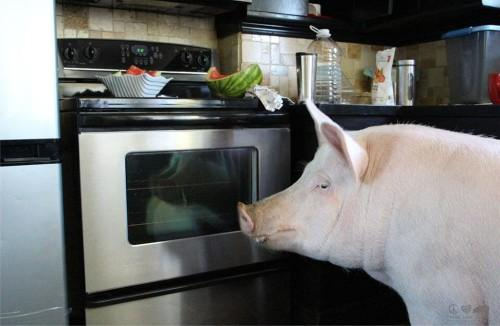 Esther-pig-18