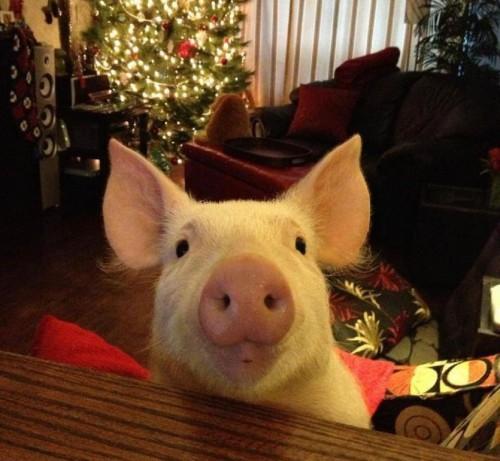 Esther-pig-4
