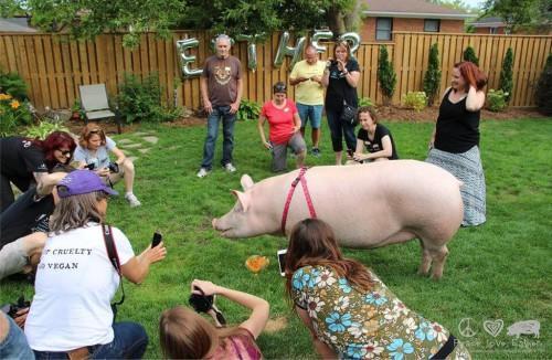 Esther-pig-8