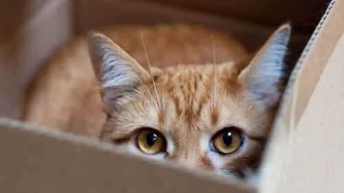 1423548138_animals___cats_red_cat_hiding_in_a_box_044660_
