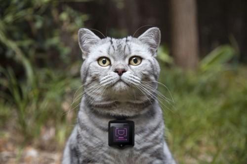 Whiskas-Catstacam
