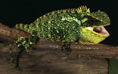 Reptil-1
