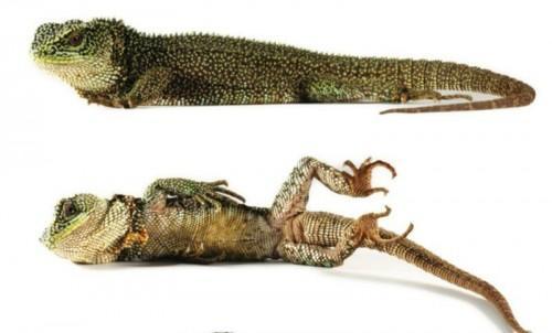 Reptil-2