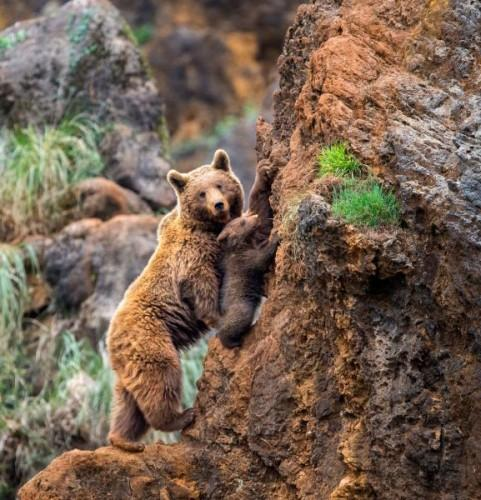 1432140481_pay-mother-bear-with-her-cub-on-a-mountain-2