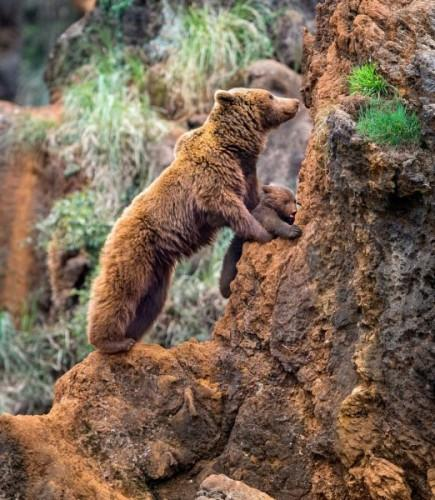 1432140808_pay-mother-bear-with-her-cub-on-a-mountain