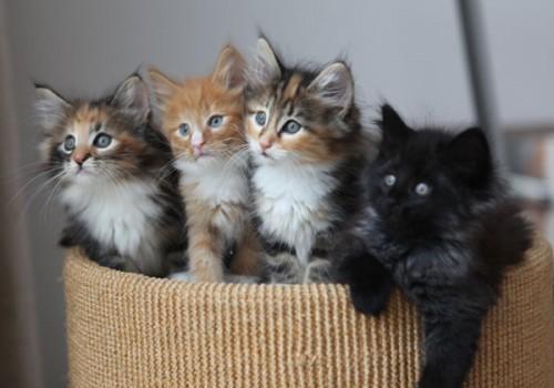 4_Kittens