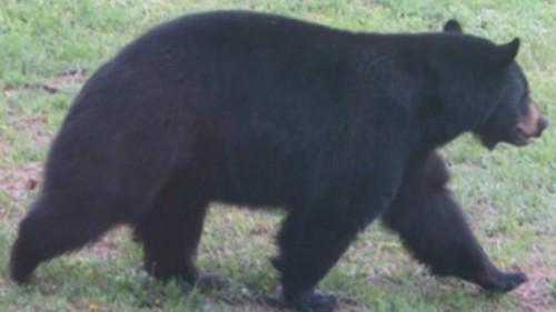 bear-1-762x428