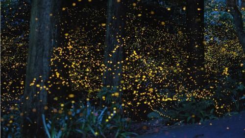 1439568622_fireflies-by-karo-yuki-11