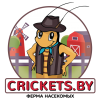 crickets_by_final_with_background_vingette