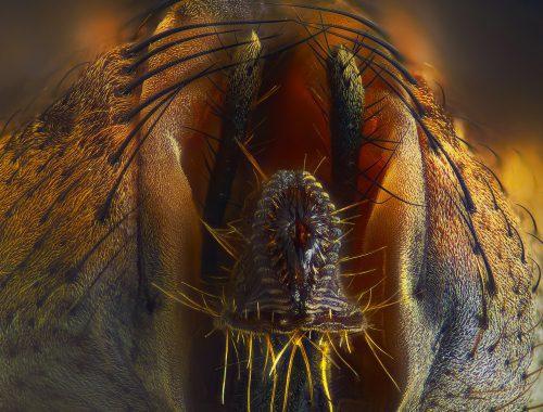 Это ротовой аппарат (хоботок) обычной комнатной мухи