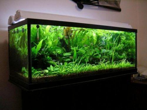 Каркасные аквариумы
