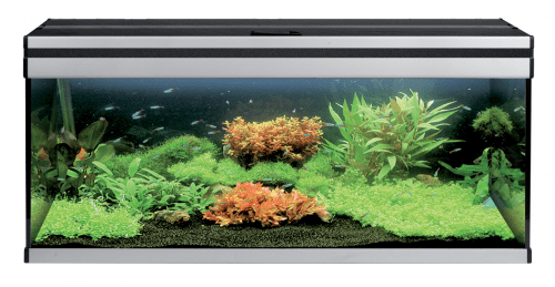 Прямоугольные аквариумы