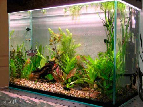 Бескаркасные аквариумы