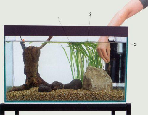 Посадка растений в аквариум