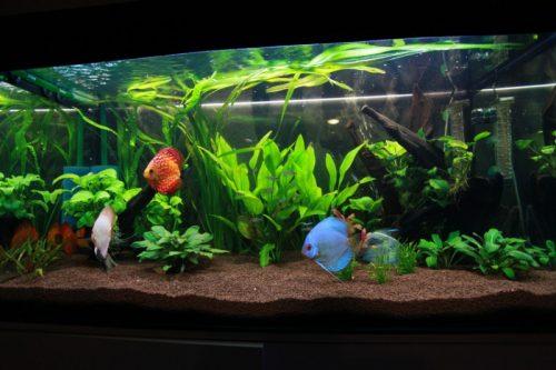 Оформление аквариума растениями